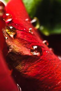 5674-d3_Fahrenheit_Restaurant_San_Jose_Food_Photography