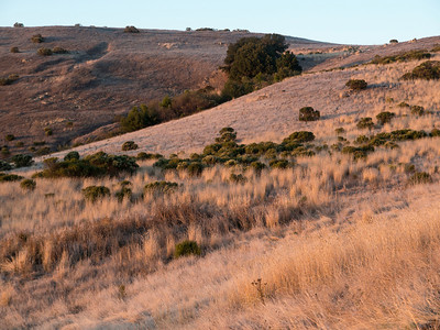 Interesting textures:  Canary grass and coyote brush (pre-hike)