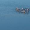 One Avocet Island