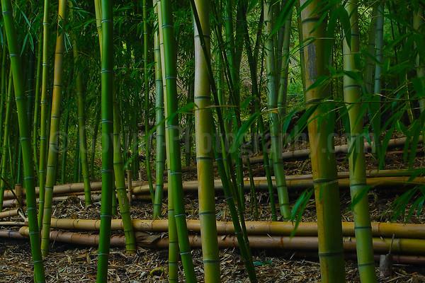 Bamboo abstract