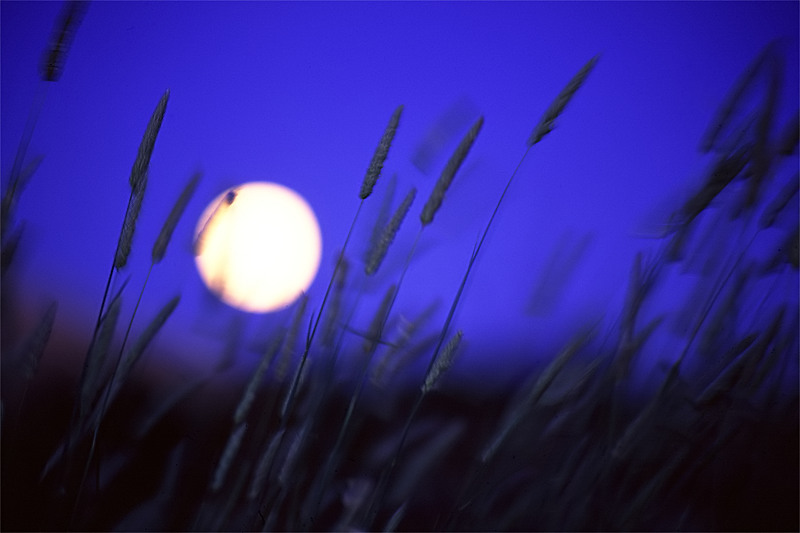 Moonrise, Montebello Open Space Preserve, Palo Alto, CA