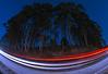 Eucalyptus Curve
