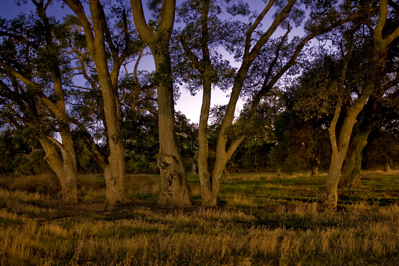 Trees at Coyote Hills.<br /> <br /> Shot in the dark of night, lit from street lights.