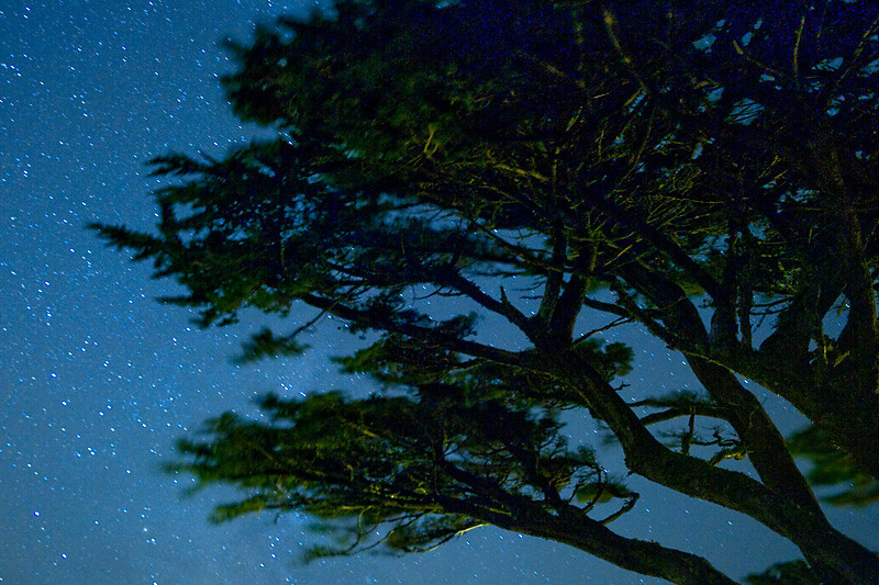 Starry Trees<br /> <br /> Wind swept trees on a windy night, Point Reyes Lighthouse.
