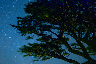 Starry Trees  Wind swept trees on a windy night, Point Reyes Lighthouse.
