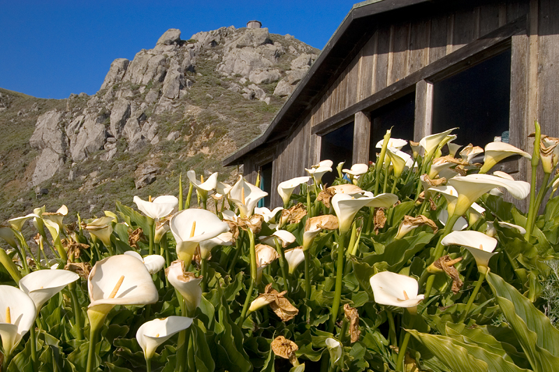 Steep Ravine Cabin and Cala Lillies, California