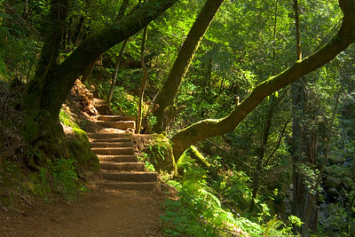 Cataract Creek Trail, Marin County, California