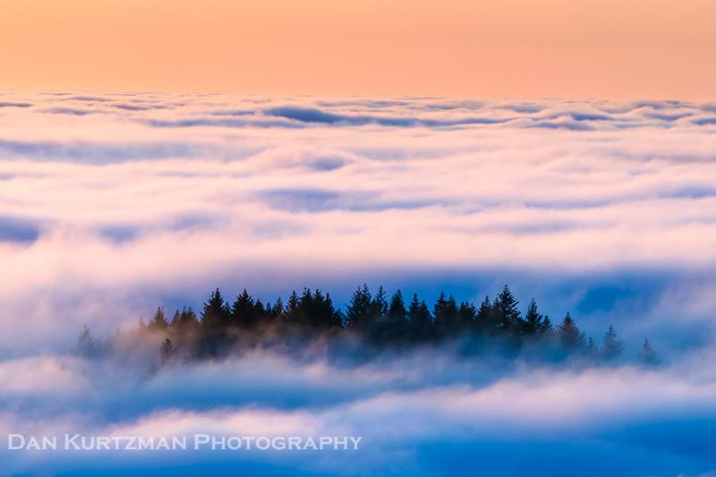 Floating in Fog, Mt. Tamalpais
