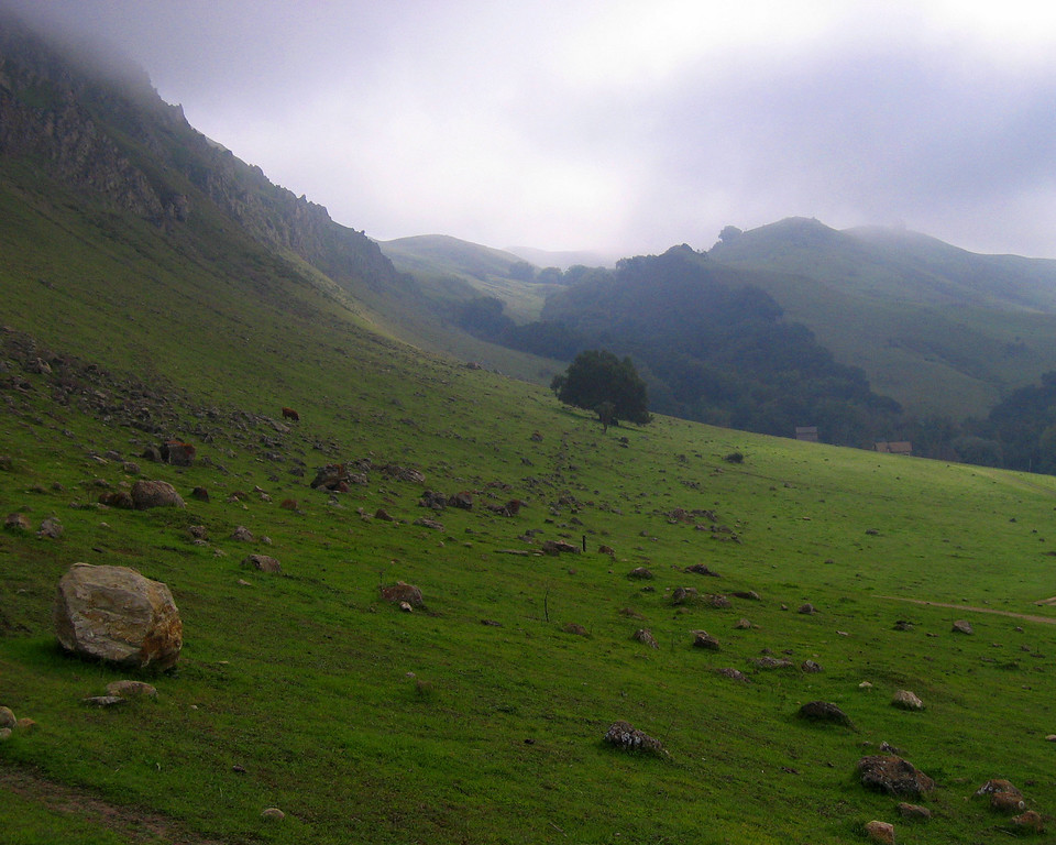 Foggy Hillside Mission Peak Regional Park California
