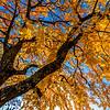 Fall Foliage in Napa Valley