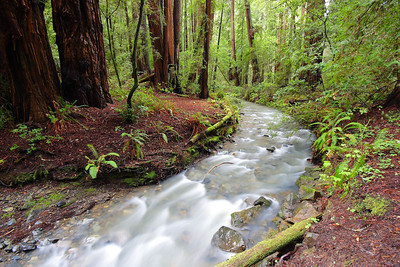 Creek and Redwoods Muir Woods National Monument California