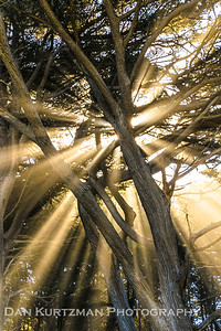 Heavenly Rays, Half Moon Bay