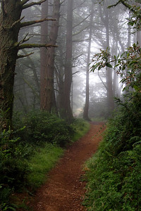 Trees in Fog Point Reyes National Seashore California