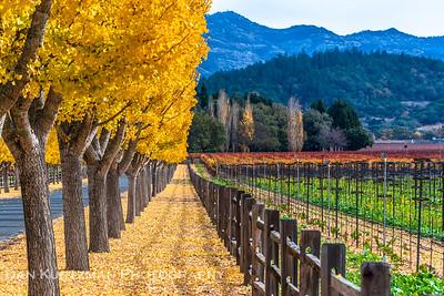 Napa Valley Autumn Colors