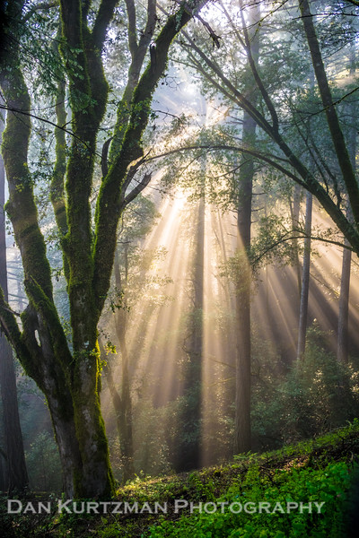Light Rays, Mt. Tam