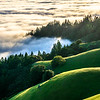 Tam Green Rolling Hills and Fog