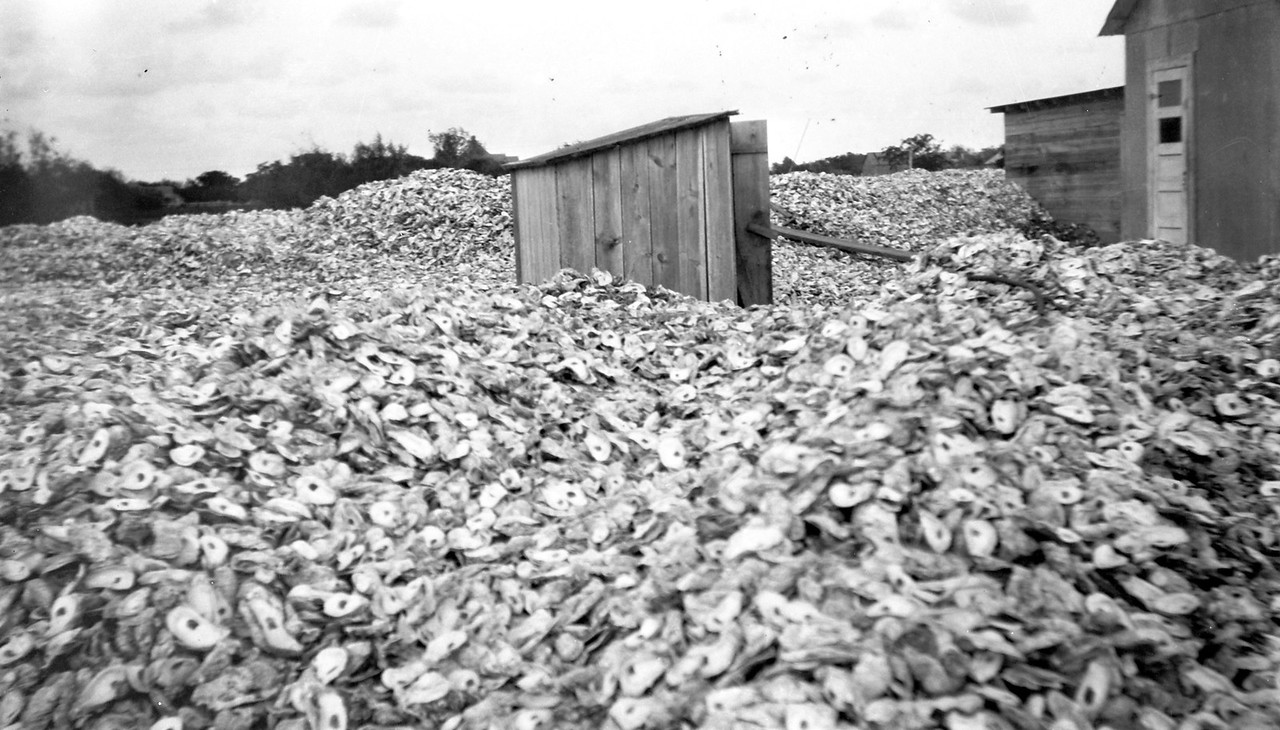 Outhouse surrounded by oyster shells. Circa 1924.