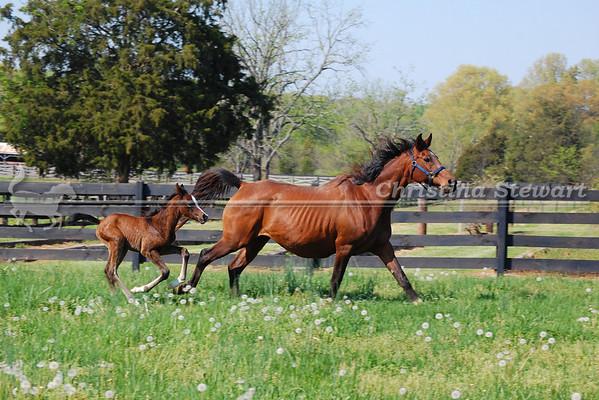 2010 Arabian Foals