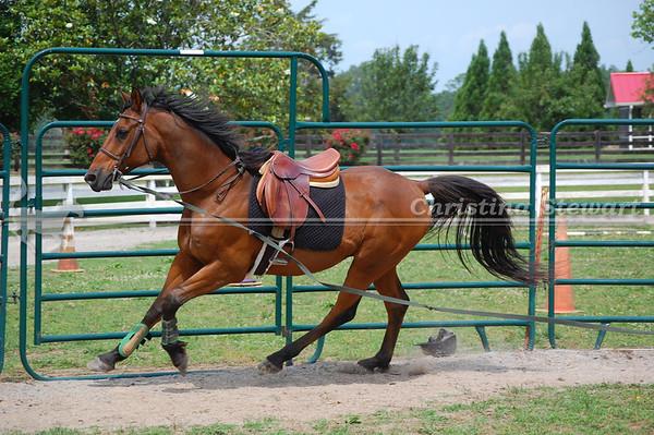 2014 Horses