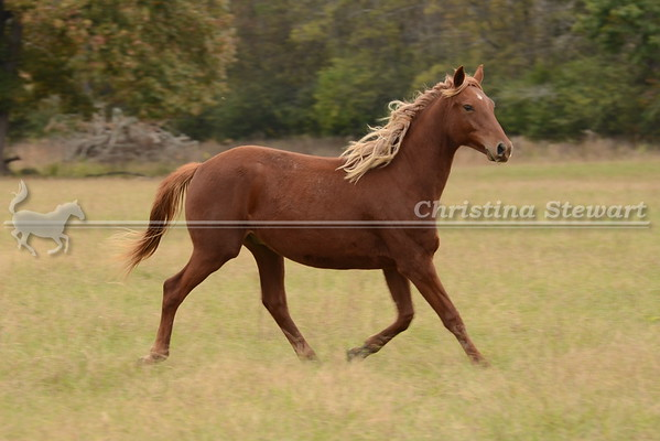 2015 Horses