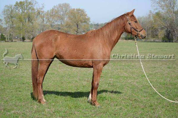 2016 Horses