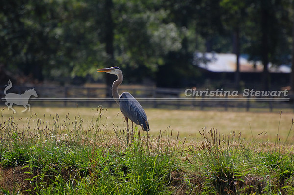 Scenery, Pets & Wildlife