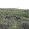 Tule Elk Preserve; Point Reyes National Seashore.