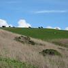 California Happy Cows ;-)