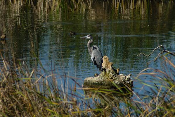 Bayland Birds 09-24-14