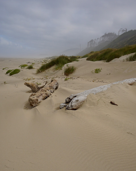 Covered Driftwood