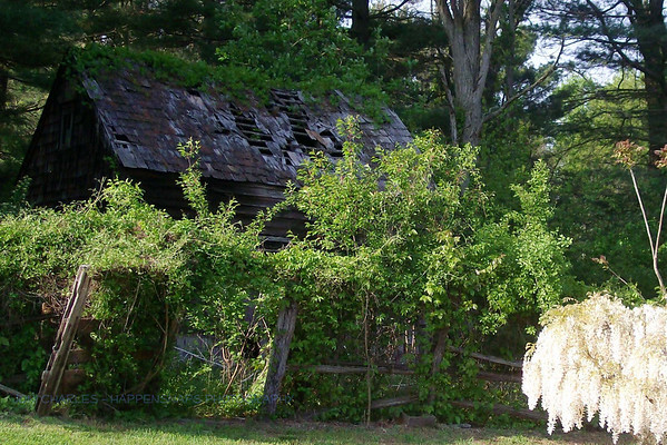 Dog House in Spring with Wisteria, Bayonet Farm