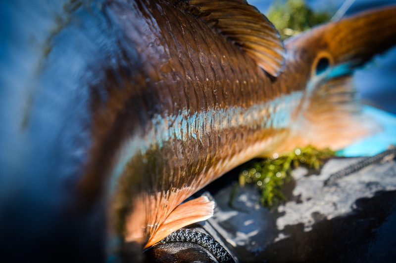 Colors of my Jackson Kilroy reflected on this nice redfish.