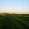 the alfalfa behind camp