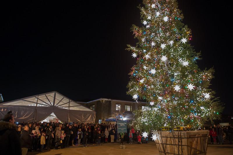 Tree Lighting 2013