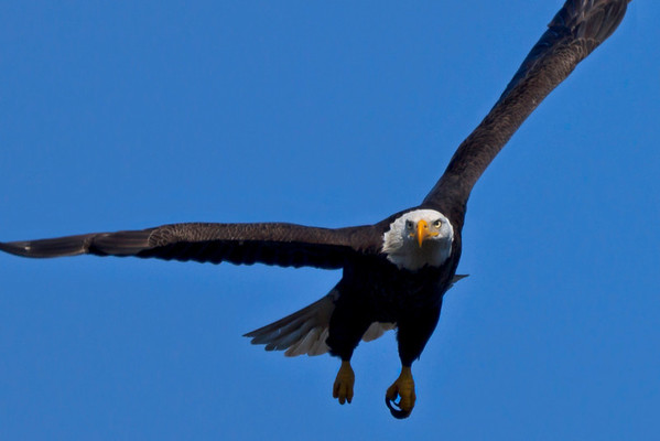Baytown Eagles on Jan. 3rd and 5th, 2012