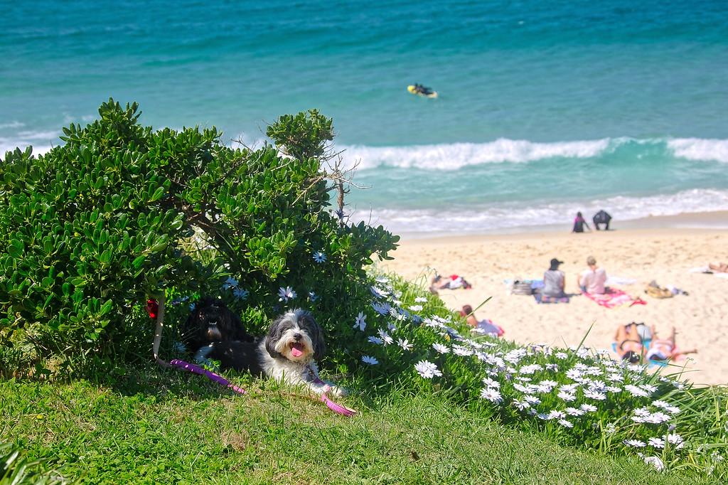 Bronte Beach - Shade