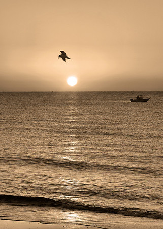 Sepia Bird N Boat 5 by 7
