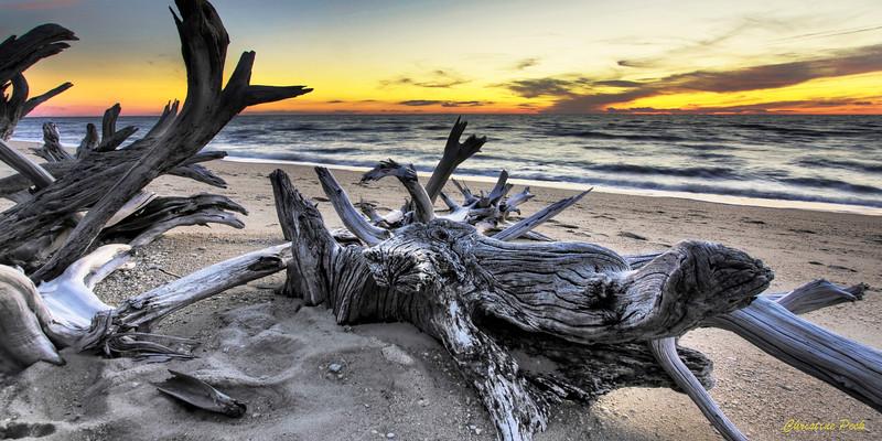 Driftwood On Higbee Beach