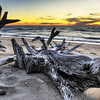 Driftwood On Higbee Beach
