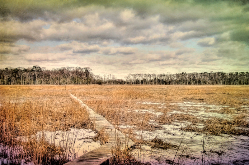 Into The Marsh, Crow Creek