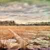 Into The Marsh, Crow Creek