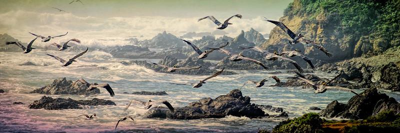 Pelicans Panorama
