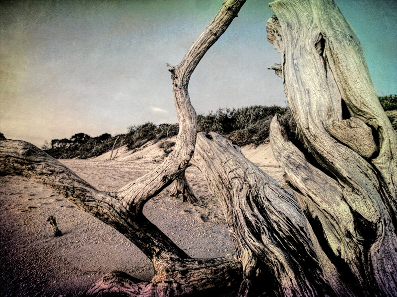 Carvings in the Driftwood