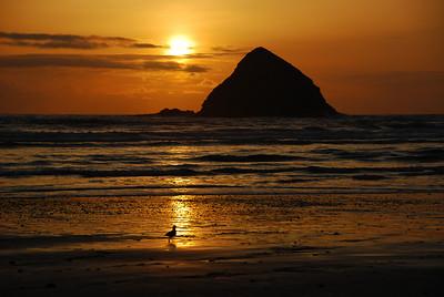 Beach Trip ~ March 2008