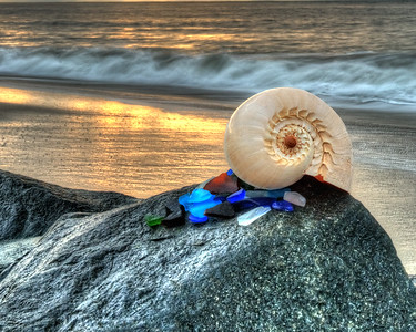 Shell and Sea Glass 3559