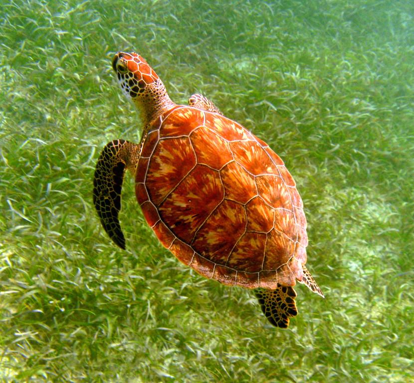 Snorkeling at Tamarindo Beach-Culebra