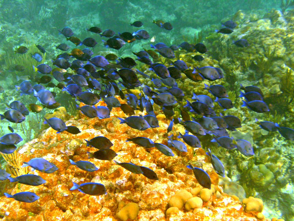 Snorkeling at Carlos Rosario Beach-Culebra