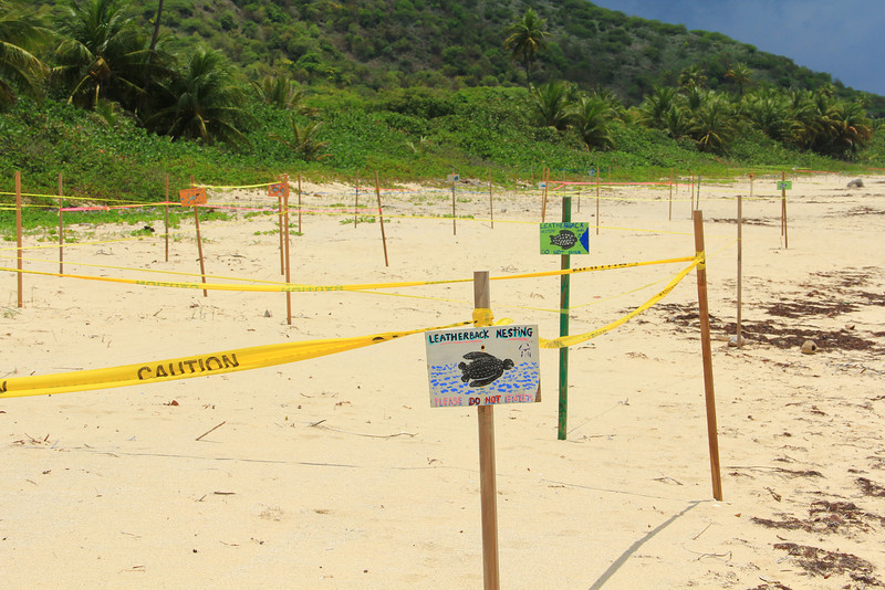 Zoni Beach-Leatherback Nesting area-Culebra