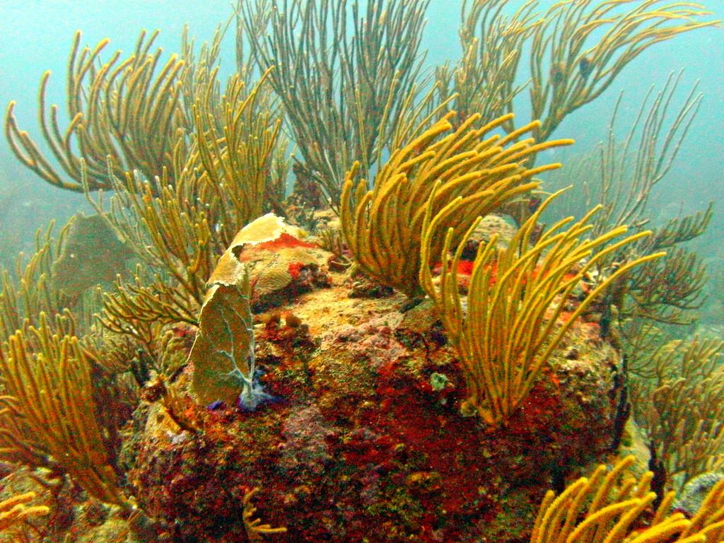 Culebra-Diving with Culebra Divers