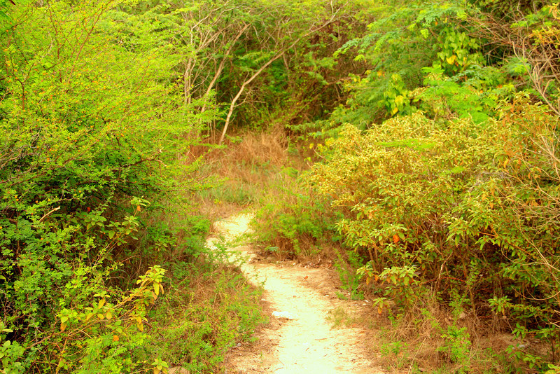 Path to Carlos Rosario Beach- Culebra